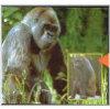 3D Reel Cards - Amazing Primates - Set of Three