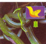 3D Reel Cards - Snakes - Set of Three