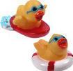 Mini Water Sports Duck