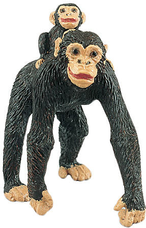 Wild Safari - Chimpanzee with Baby