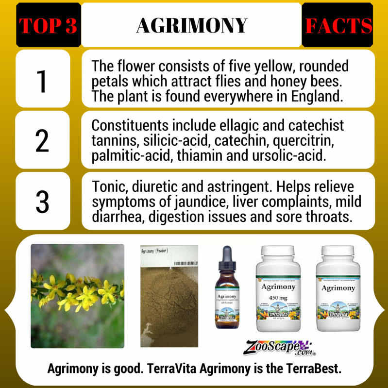 Agrimony (Xian He Cao) Tea - Additional View