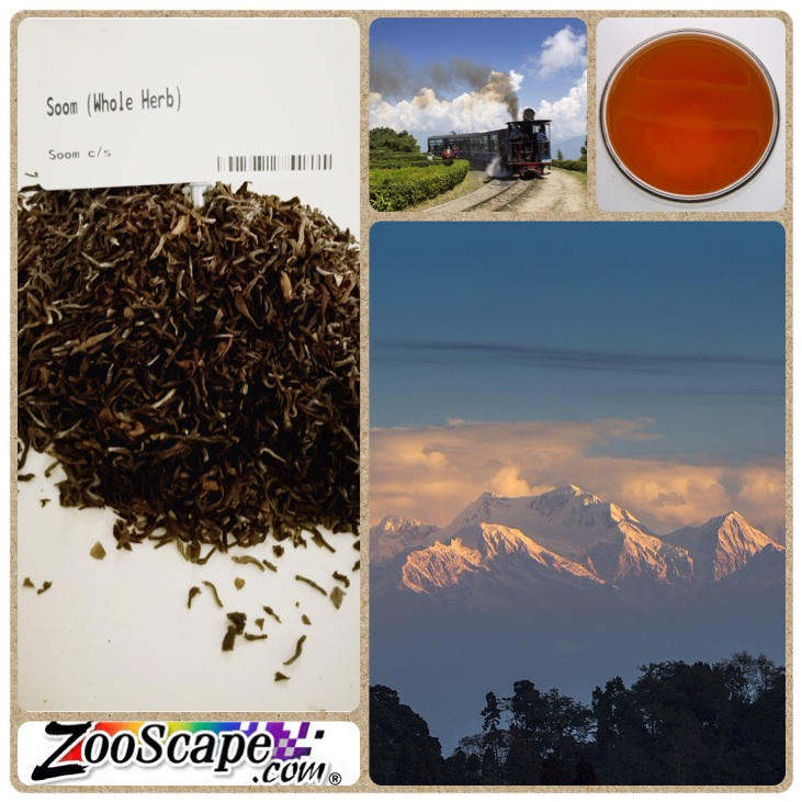 Soom Darjeeling Tea