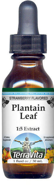 Plantain Leaf Glycerite Liquid Extract (1:5) - Strawberry Flavored