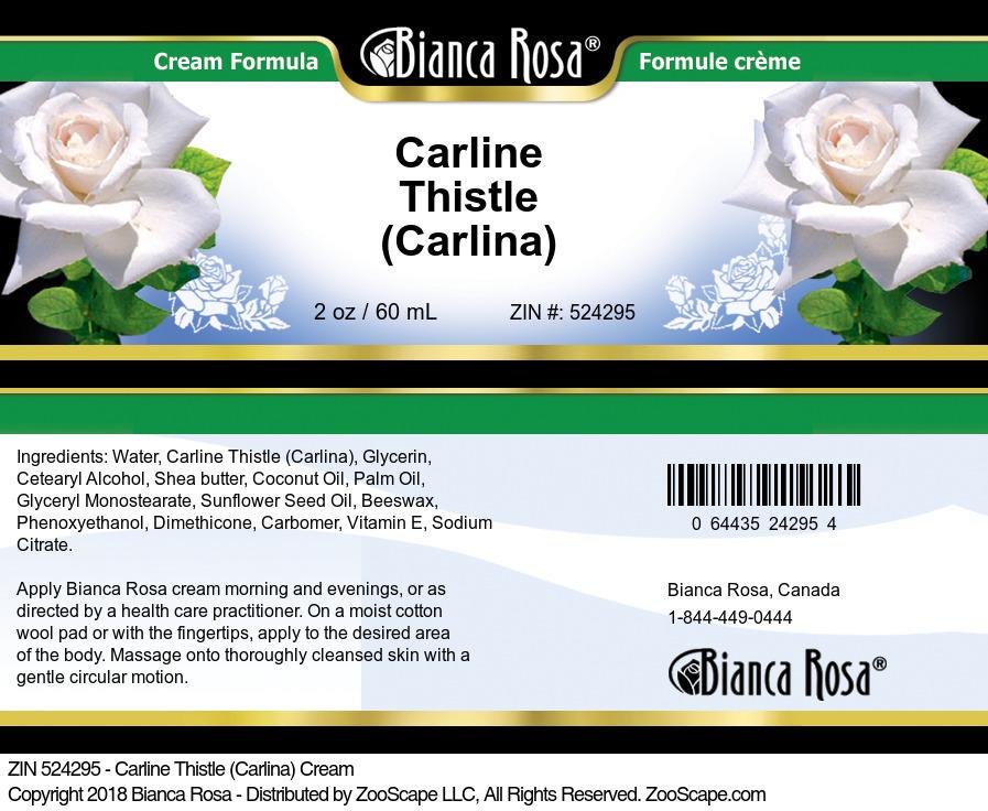 Carline Thistle (Carlina) Cream