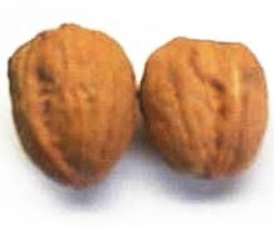 English Walnuts <BR>(In Shell)