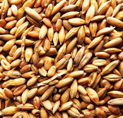 Oats (Sprouted, Hulled)