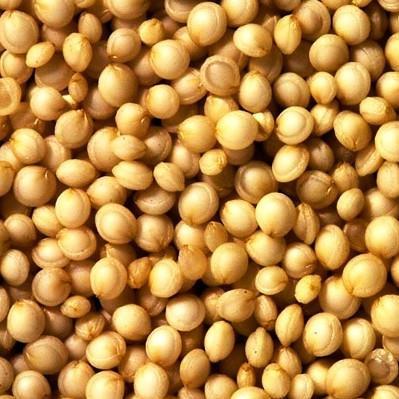 Quinoa Grain <BR>(White, Organic)