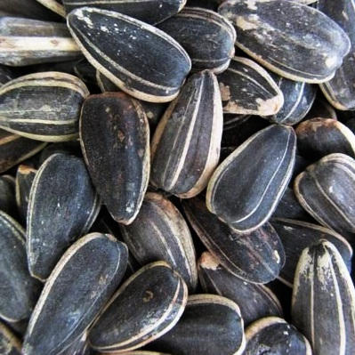 Sunflower Seeds, In Shell, Raw