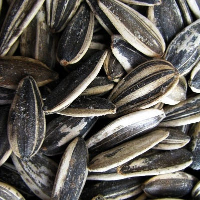 Sunflower Seeds, In Shell, Roasted and Salted