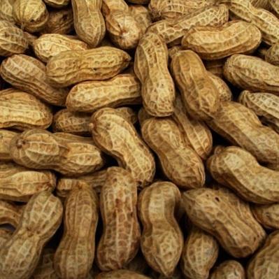 Peanuts, Raw, In Shell